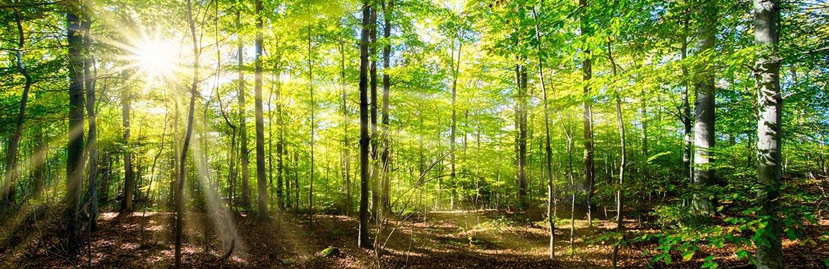 Forêts gérées durablement